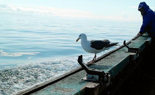 オホーツク海釣り